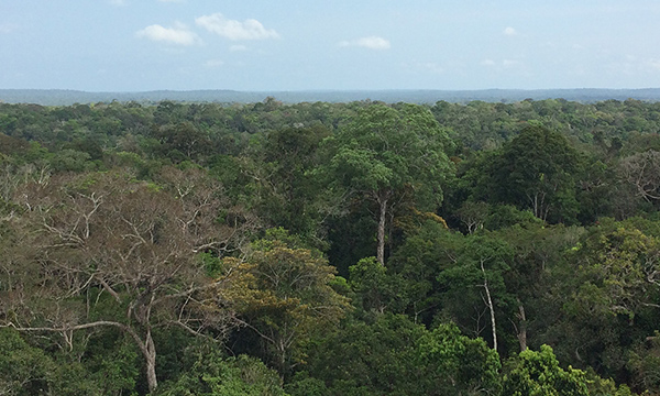 Biomas e biodiversidade