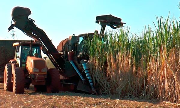 Bioenergia e outras opções para o Brasil