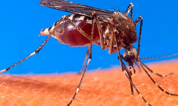 Doenças transmitidas por mosquitos é o tema do Ciência Aberta